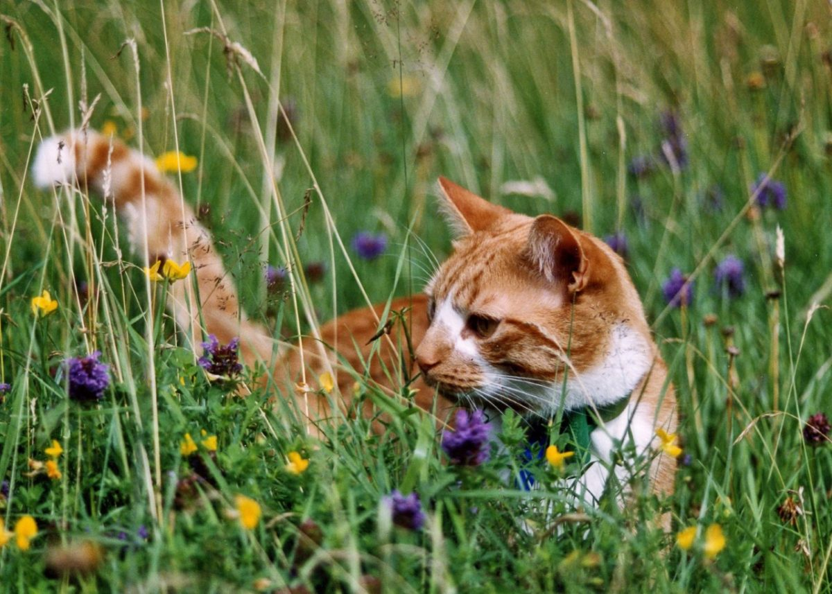 Learn How To Make Your Garden Feline Friendly At This Year