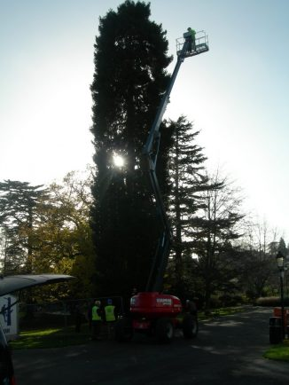 Malvern Remembers Loved Ones With Rotary Clubu0027s Tree Of Light